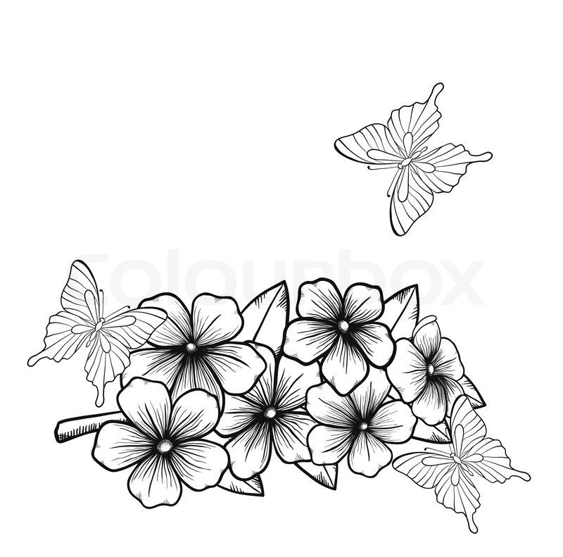 800x791 Beautiful Monochrome Black And White Background With A Border