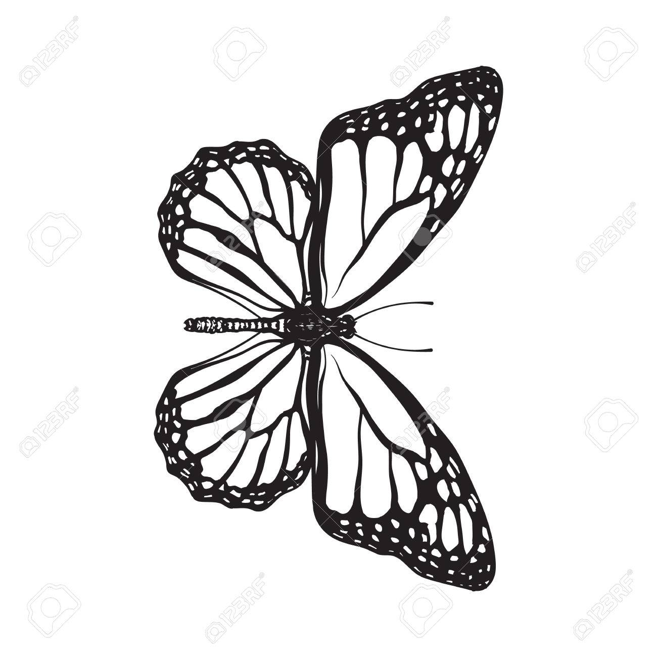 1300x1300 Top View Of Beautiful Monarch Butterfly, Sketch Illustration