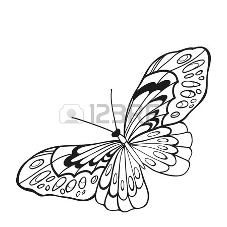 450x450 Black And White Butterfly With Open Wings In A Top View. Sketch