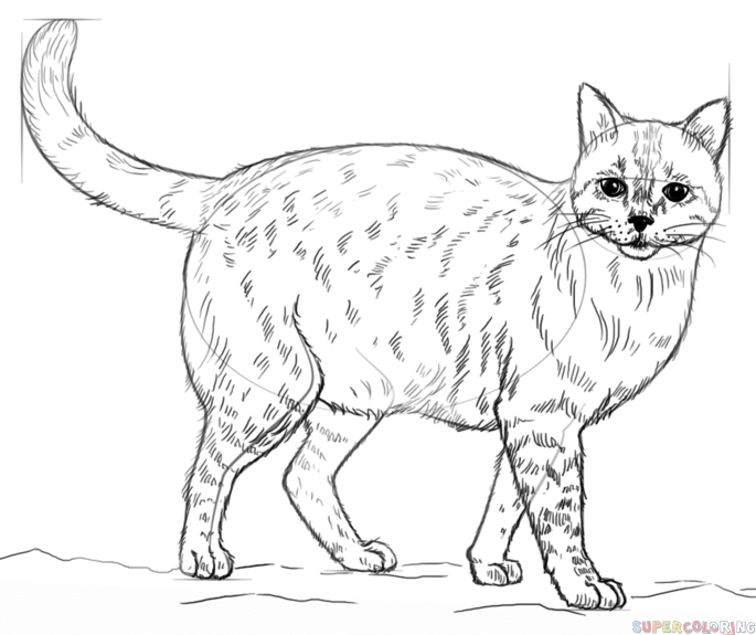685x575 How To Draw A Realistic Cat Step By Step Drawing Tutorials