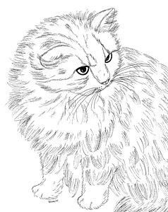 238x300 Persian Cat Drawings Fine Art America