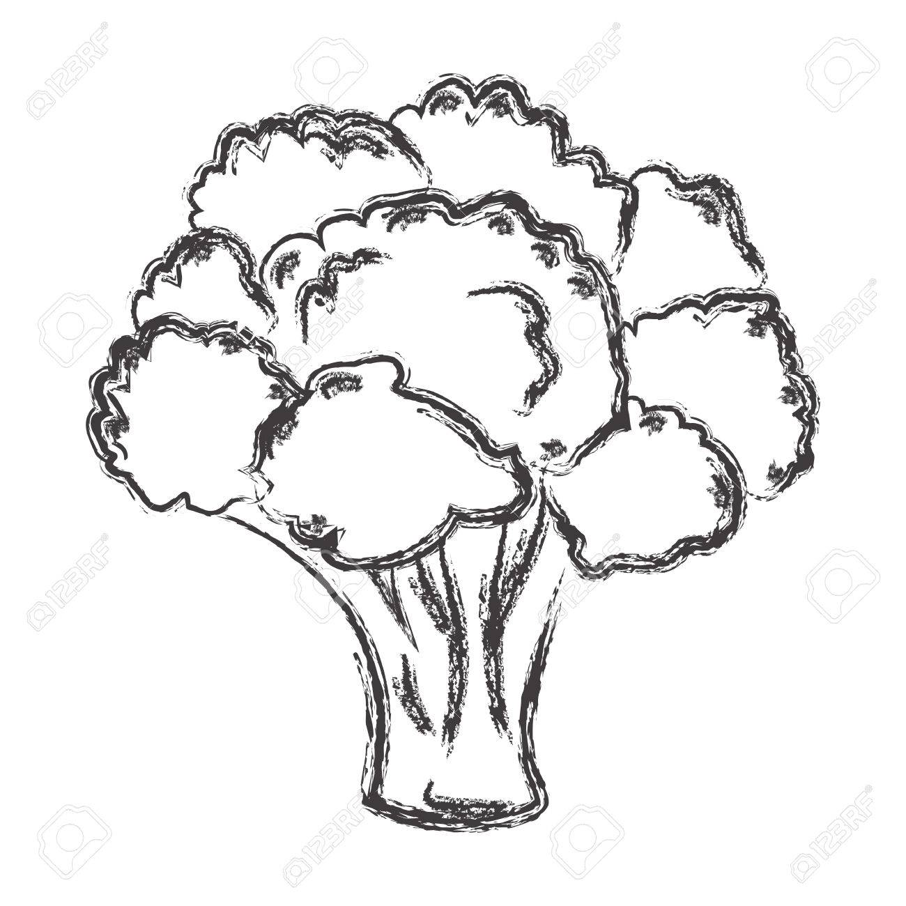 1300x1300 Atristic Hand Drawn Illustration Of Broccoli, Chalk Drawing