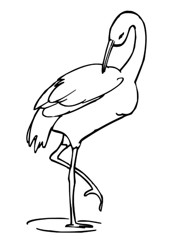 600x799 Crane Bird Stands On One Leg Coloring Pages