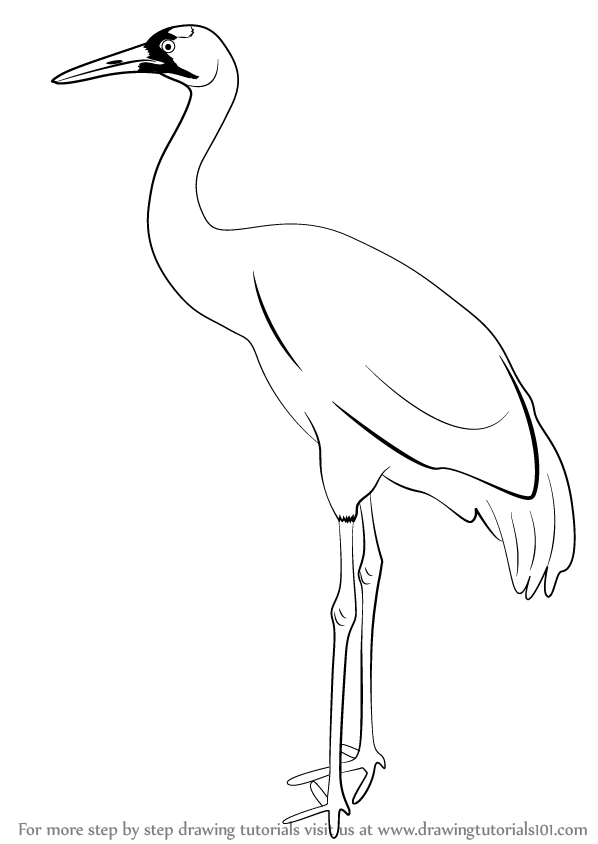 598x844 Learn How To Draw A Crane (Birds) Step By Step Drawing Tutorials