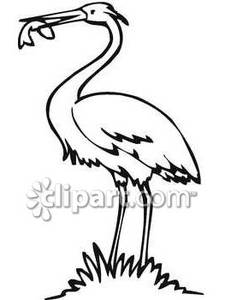 225x300 And White Crane Eating Fish
