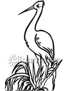 225x300 And White Crane In Tall Grass