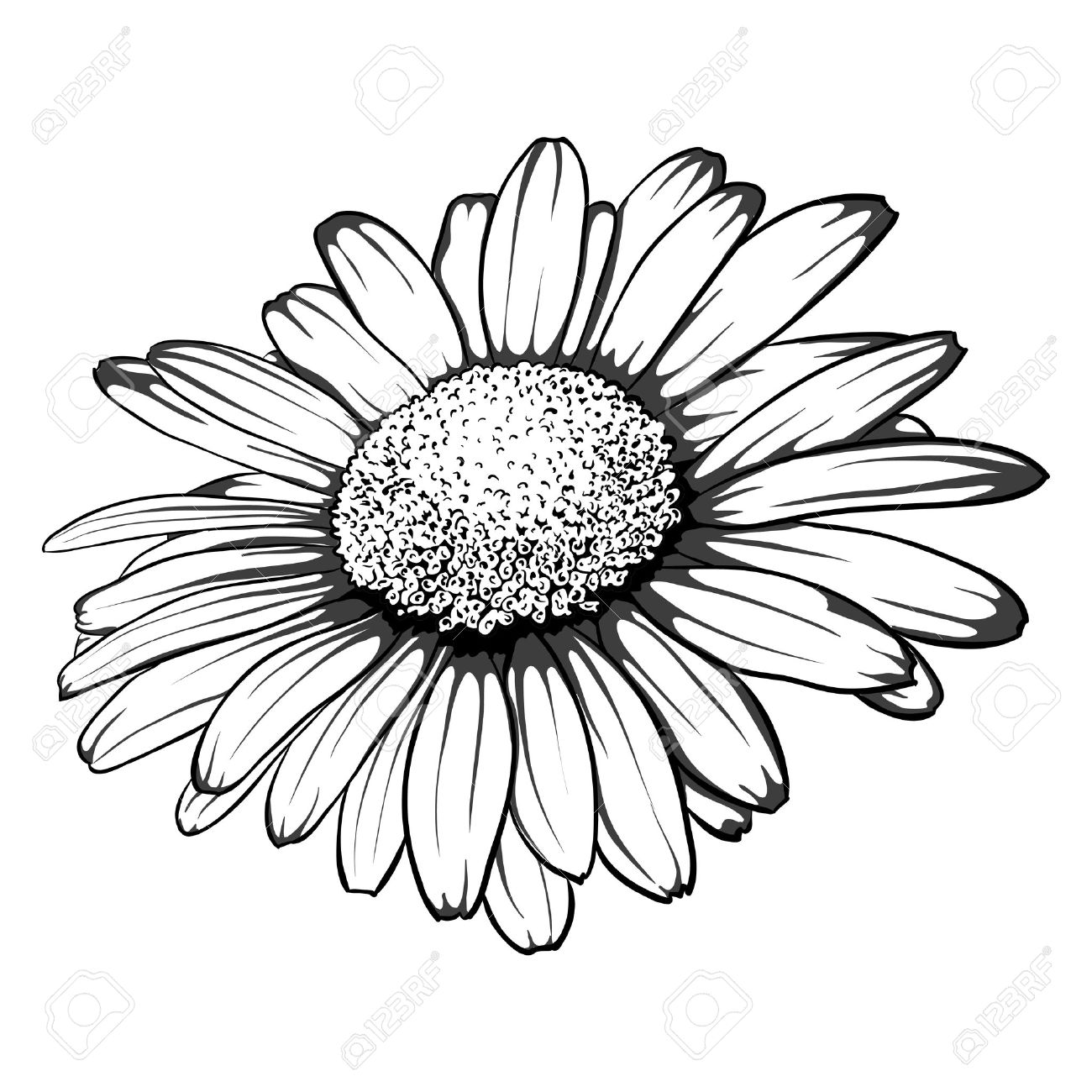 White daisy drawing at getdrawings free for personal use white 1300x1300 beautiful monochrome black and white daisy flower isolated izmirmasajfo
