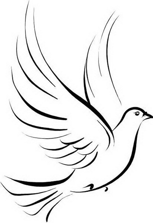 White Dove Drawing At Getdrawings Free For Personal Use White