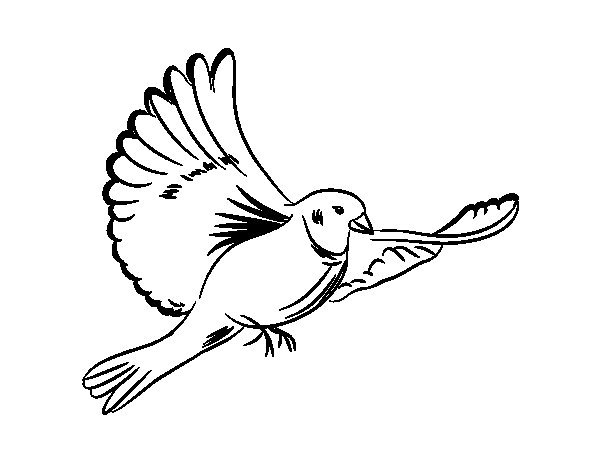 White Dove Drawing at GetDrawings.com | Free for personal use White ...