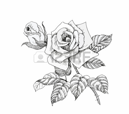 450x396 Flower Sketch Stock Photos. Royalty Free Business Images