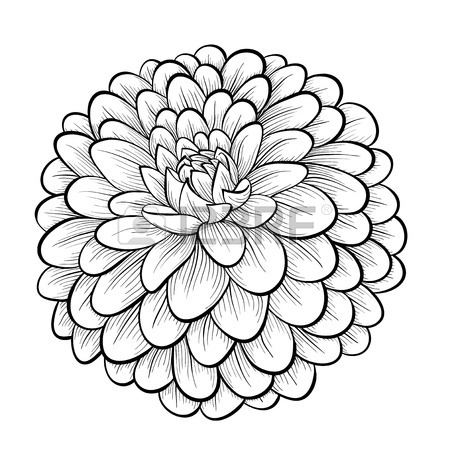 450x450 Gallery For Gt Dahlia Tattoo Black And White Tattoo Ideas