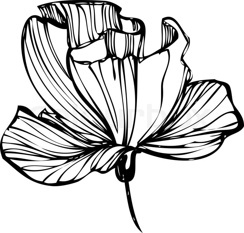 White flower drawing at getdrawings free for personal use 800x766 sketch of flower buds on a white background stock vector colourbox mightylinksfo