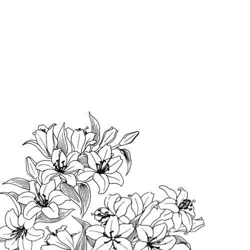 500x500 And White Flowers Drawings Tumblr