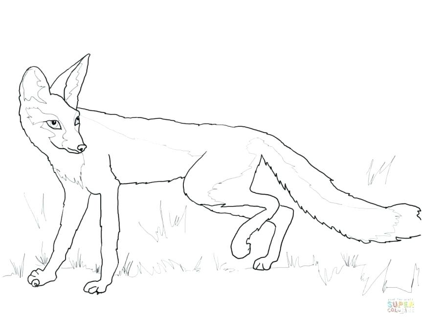 White Fox Drawing
