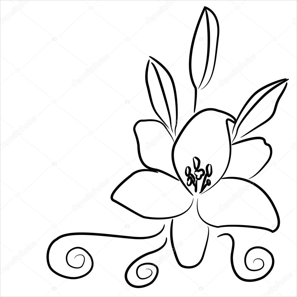 1022x1024 Lily, A Black And White Drawing Stock Vector Lenkusa