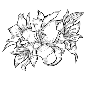 380x400 Lily Flower Black And White Drawing Black And White Lily Drawing