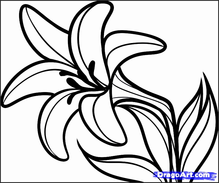 771x642 Drawings Of Lilies Flower Gjjdg Elegant Another Lily Flower By