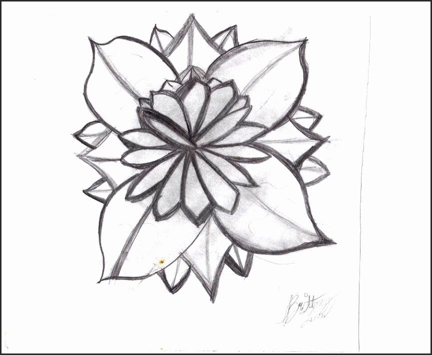 White Lily Flower Drawing