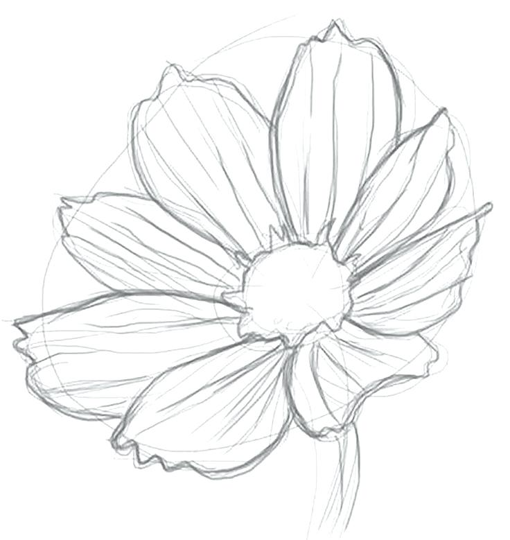 736x779 Flowers Drawing Drawing Of A Flower 6 Nice Design Draw Flower Step