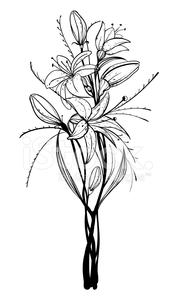 605x1024 Lily Flowers Outline Illustration Stock Vector