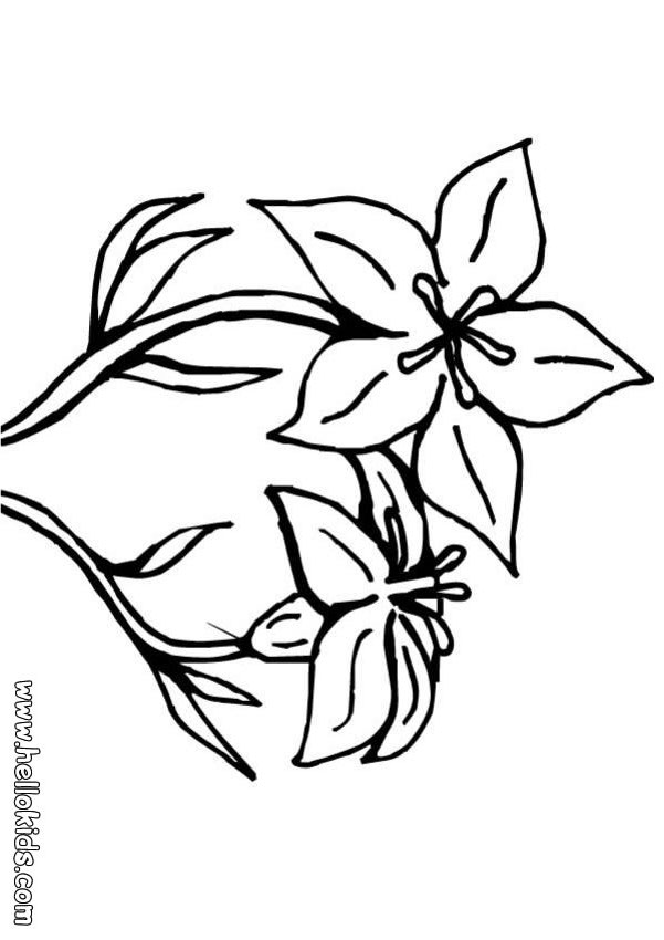 601x850 Lily Flower Coloring Pages