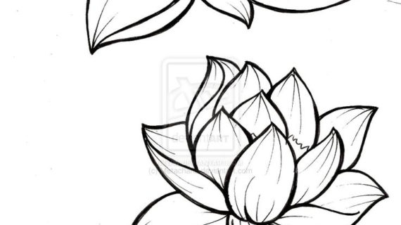 570x320 Outline Drawing Of Flowers Lily Flower Drawing Outline Tattoos