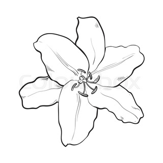 320x320 Single Hand Drawn White Lily Flower Bud With Stem And Leaves, Side