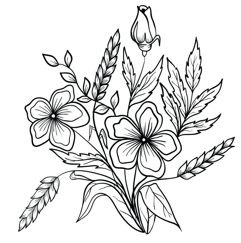 794x800 Flower Drawing Outline