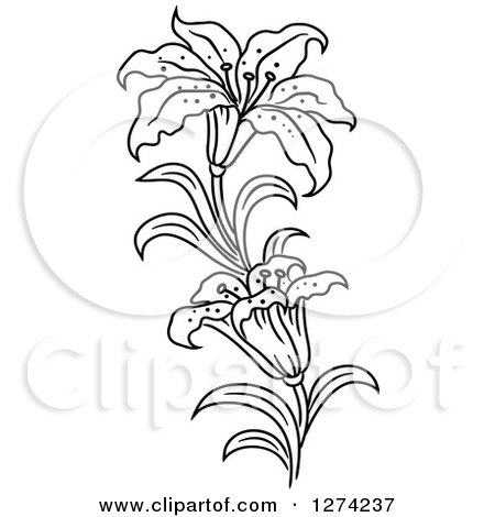 450x470 Clipart Of A Black And White Lily Flower Stem