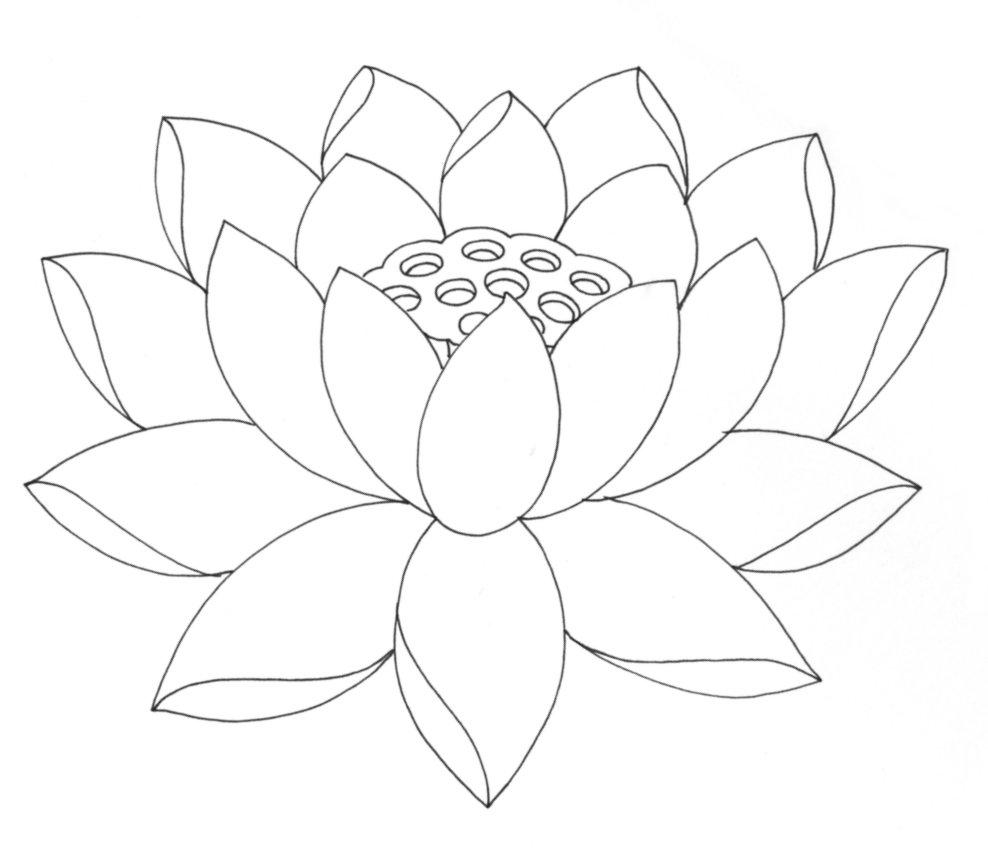 988x863 Lotus Drawing For Kids Lotus Flower Coloring Pages Printable