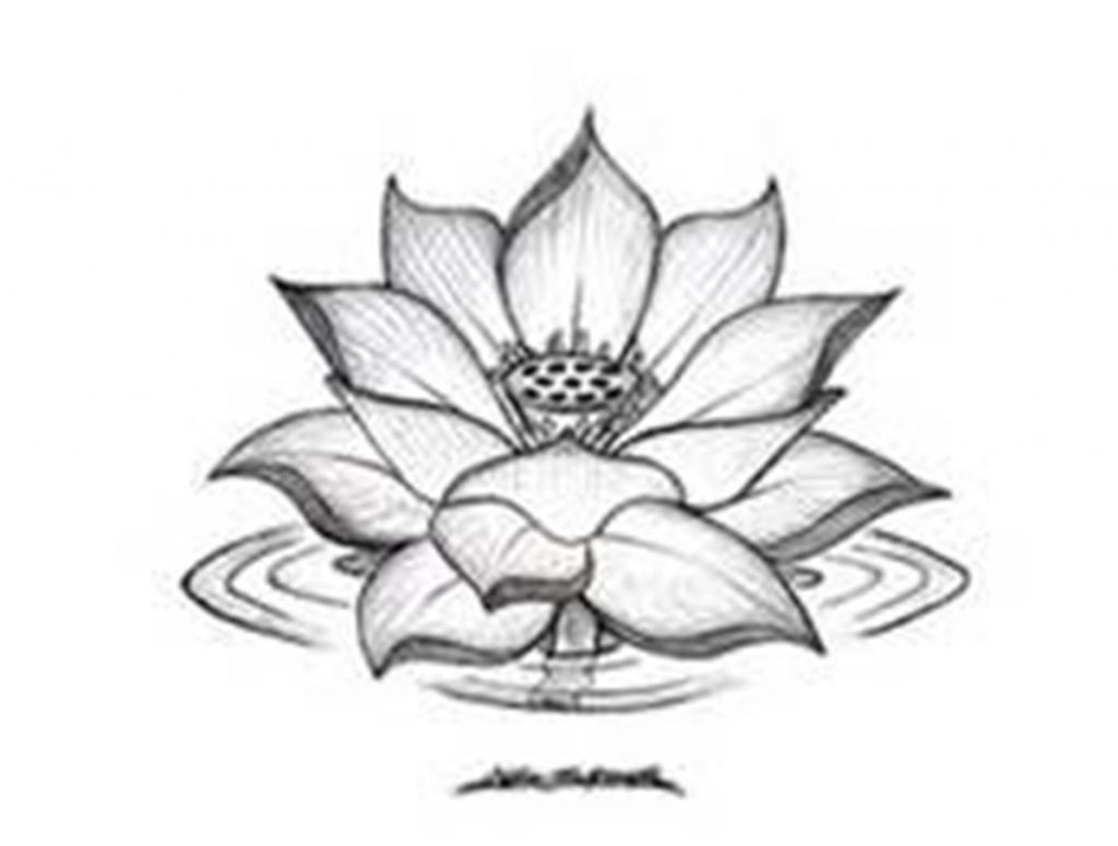 White lotus flower drawing at getdrawings free for personal 1024x775 lotus flower drawing black and white drawing of lotus flower izmirmasajfo