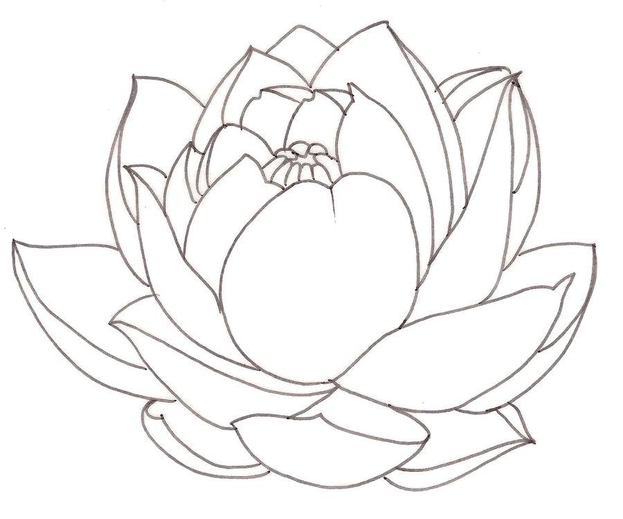 900x750 Lotus Tattoo 1 By ~metacharis On Tattoos And Flash