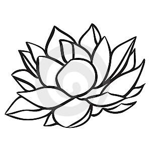 300x300 Pin By Melissa Wise On Tattoos Flower Tattoos