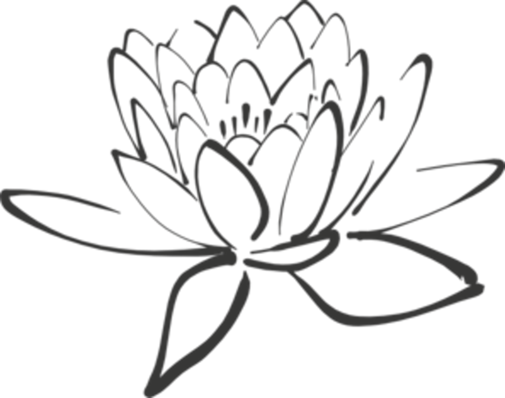 990x780 Unique Stock Of Lotus Flower Pictures Black And White Lotus