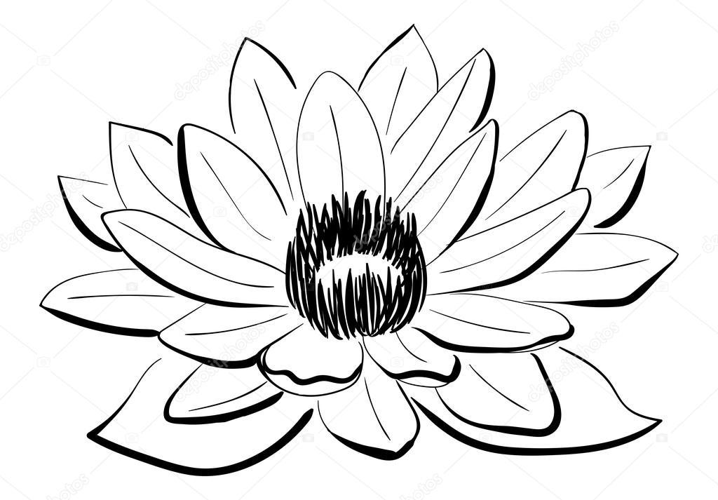 1024x713 Vector Black And White Lotus Flower Stock Vector Ivanchuk