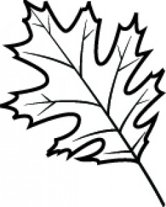 white oak leaf drawing at getdrawings com free for personal use rh getdrawings com Poplar Leaf Clip Art Black and White Oak Leaves Acorns Clip Art