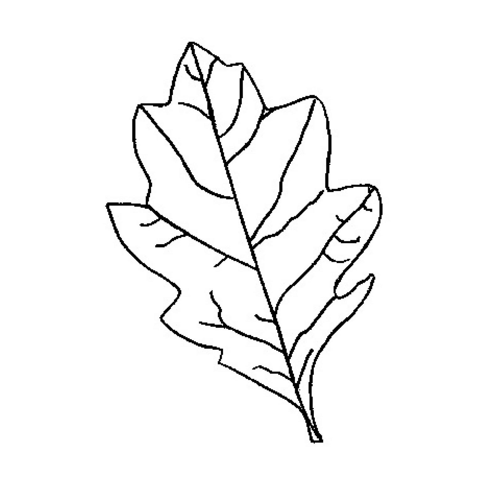1600x1600 best photos of oak leaf outline clip art