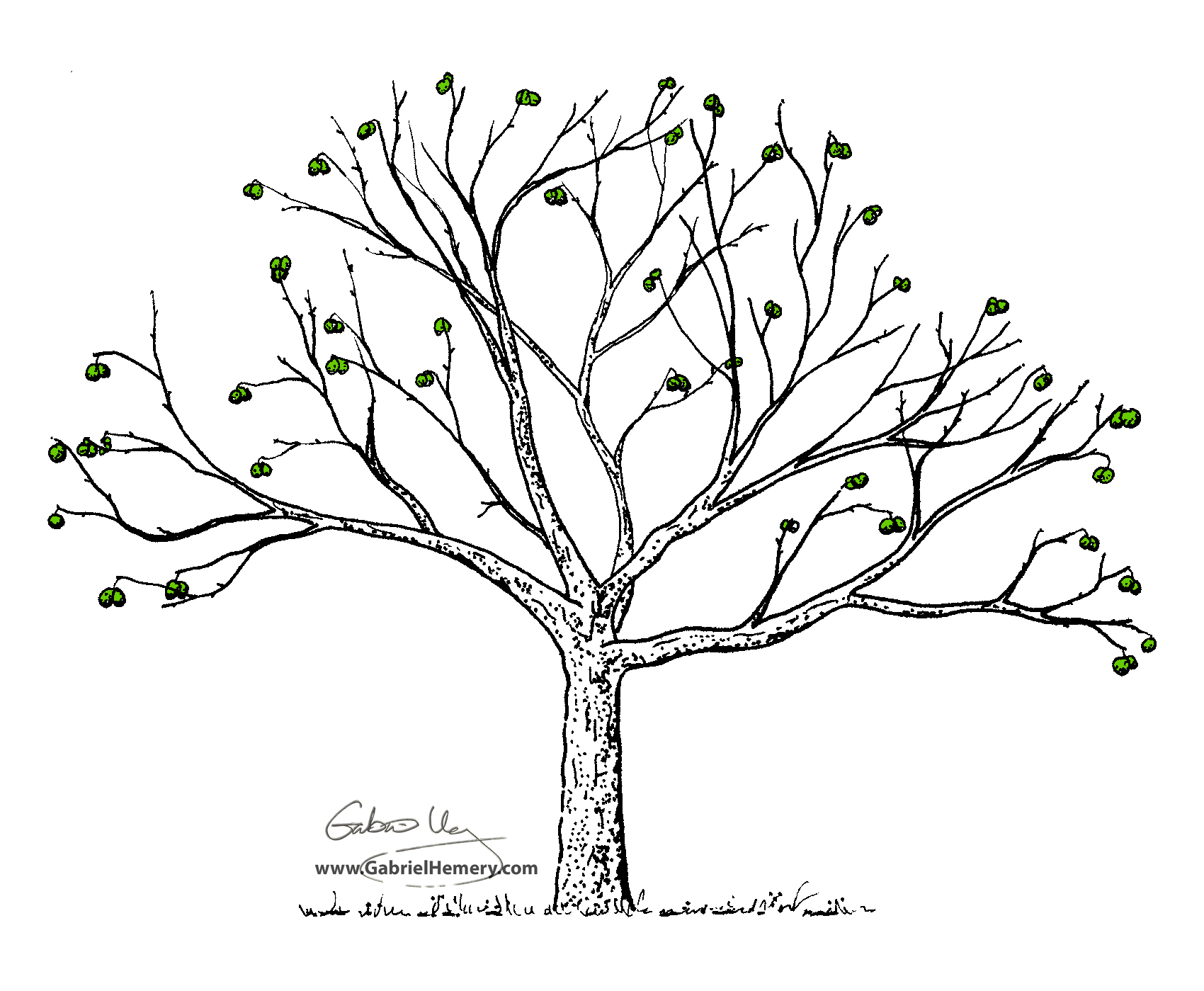 White Oak Tree Drawing