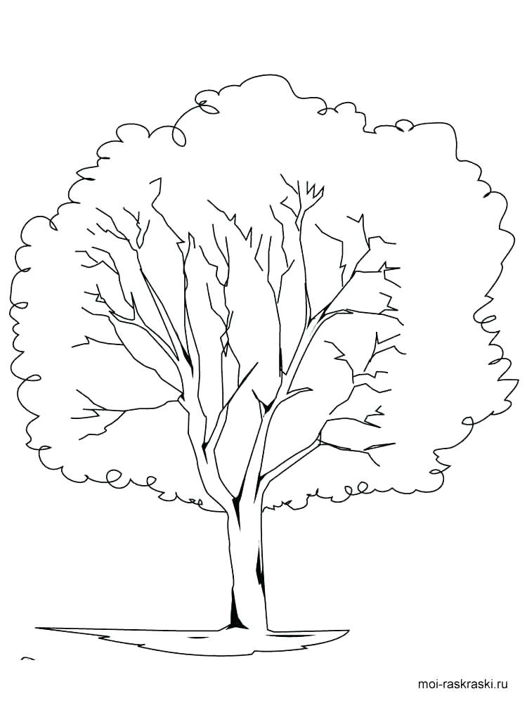 750x1000 Oak Tree Coloring Pages Coloring Page Of A Tree White Oak Tree
