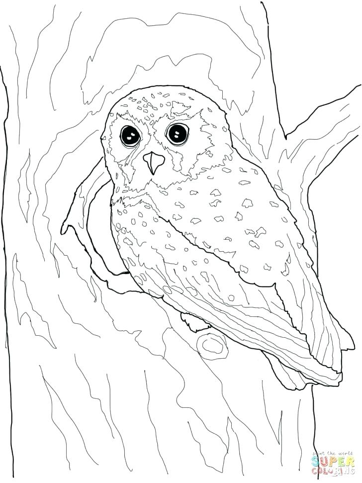 728x971 Snowy Owl Coloring Page Barn Owl Coloring Page Snowy Snowy Owl