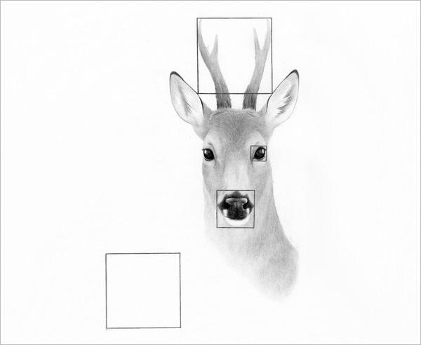 600x492 Free Deer Drawings Amp Designs Free Amp Premium Templates