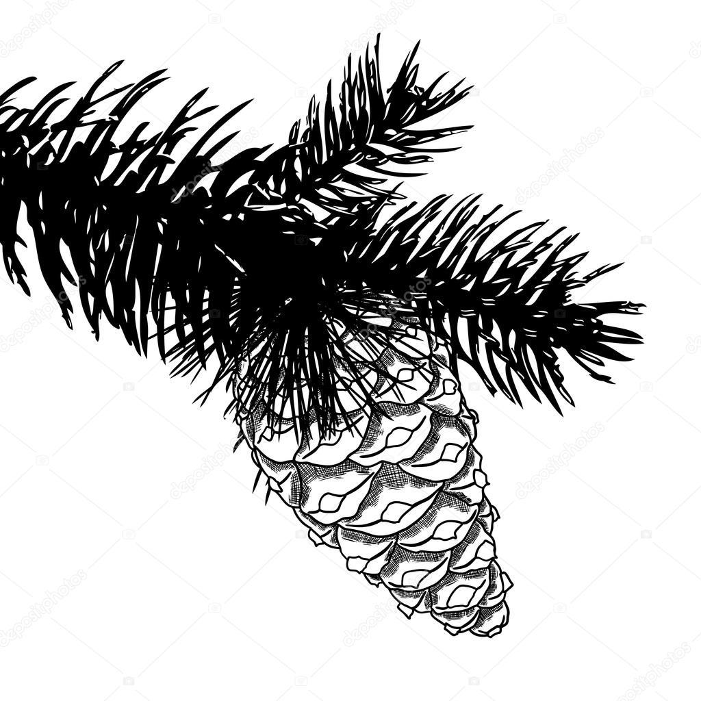 1024x1024 Sketch Hand Drawing Pine Cone Stock Photo Goldenshrimp