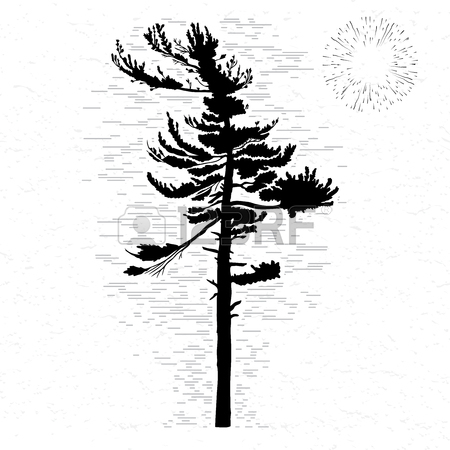 450x450 Fir Tree On White Textured Background Illustration. Black