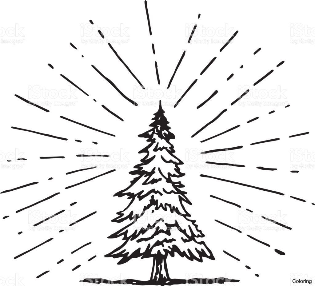 1024x930 How To Draw A Pine Tree Coloring Pages Drawing 1f Realistic Trees
