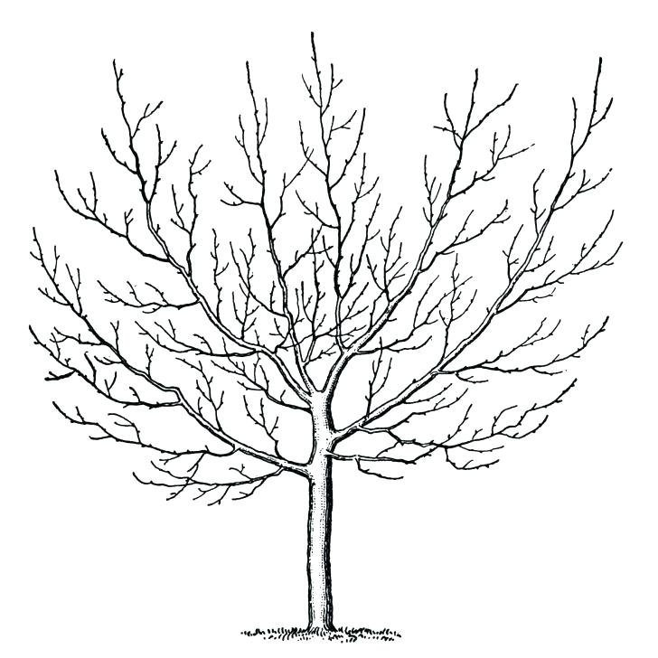 728x728 Winter Tree Coloring Page Pine Trees Coloring Pages Welcome