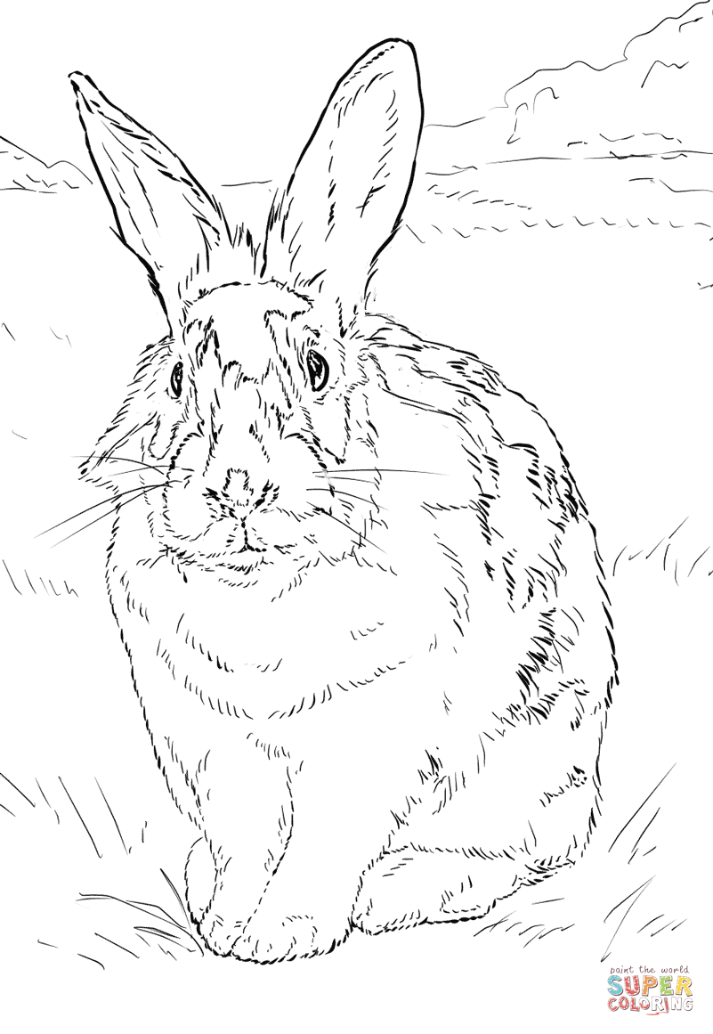 801x1161 Black And White Rabbit Coloring Page Free Printable Coloring Pages