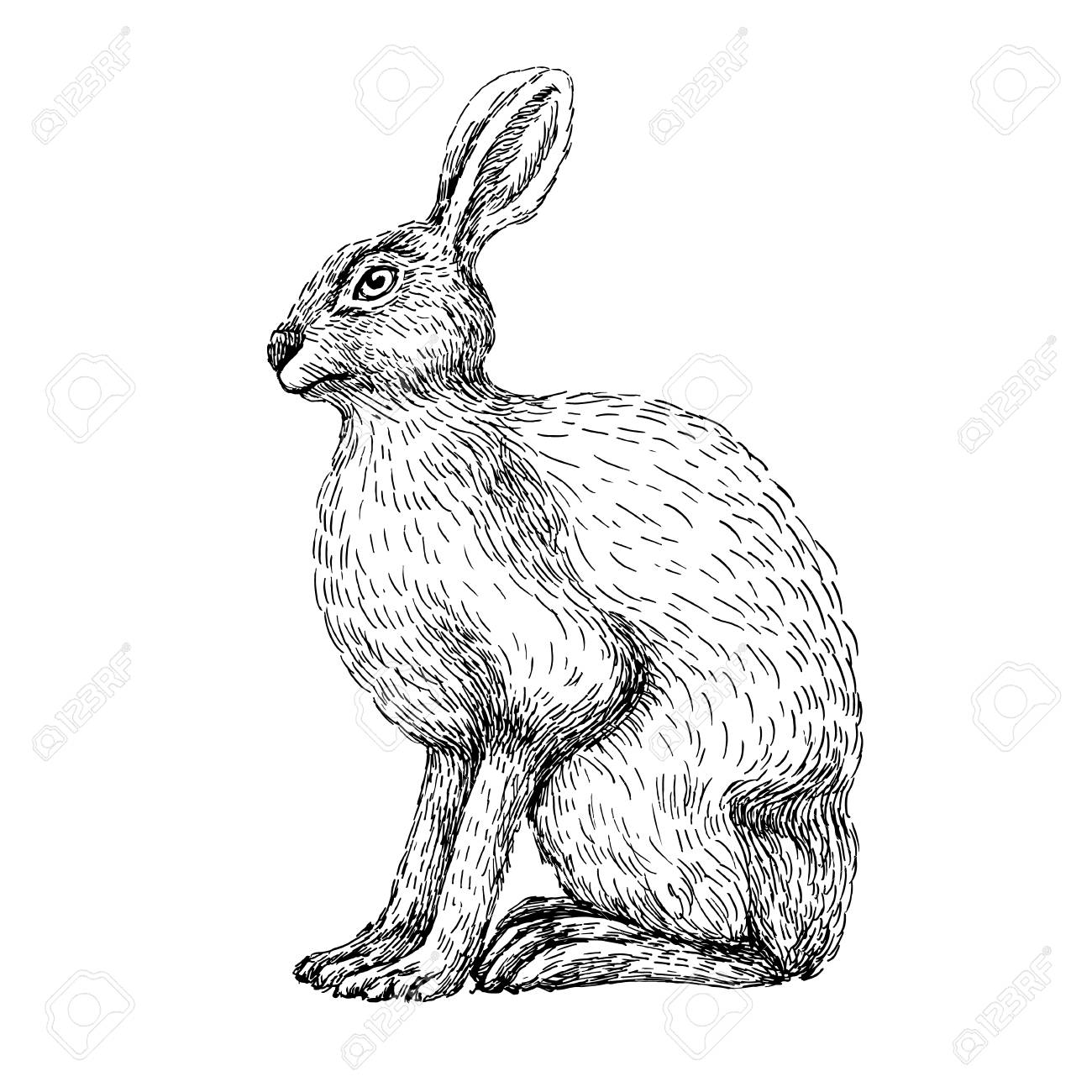 1300x1300 Sketch Line Art Drawing Of Hare Rabbit. Black And White Vector