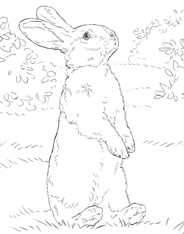 377x480 White Rabbit Standing On Hind Legs Coloring Page Free Printable