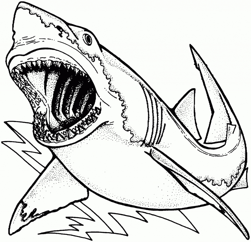 1024x984 Great White Shark Coloring Pages And Fish Drawing Page