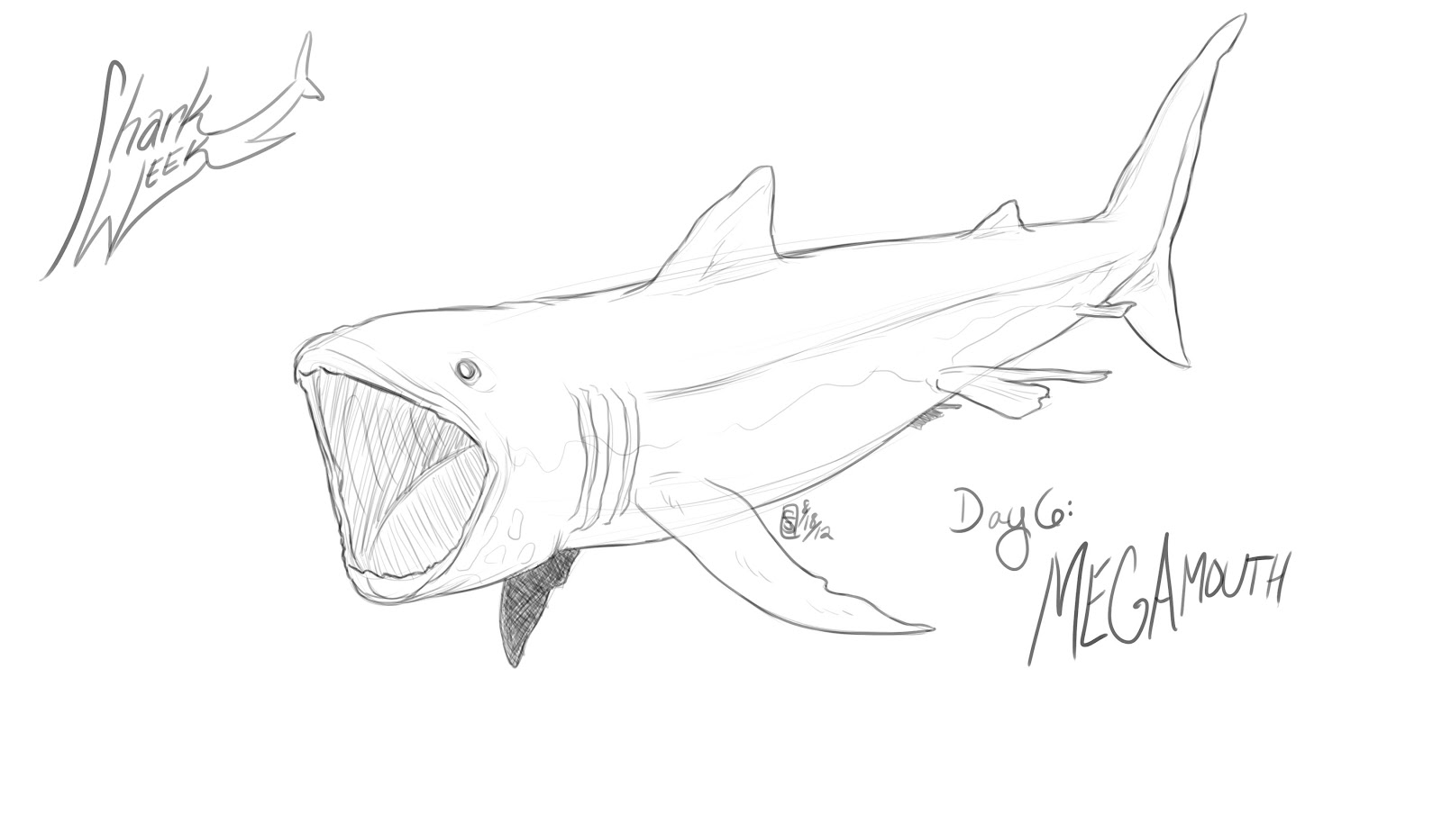 White Shark Drawing at GetDrawings.com | Free for personal use White ...